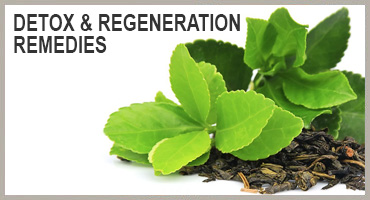 herbal remedies for detox and regeneration